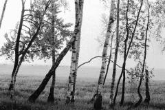 Petouski-Russie 2002