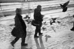 Siberie 2004
